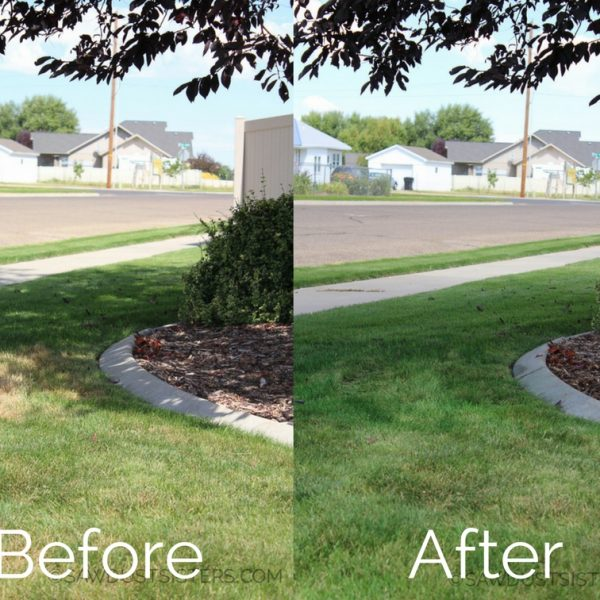How I Greened up my Lawn with Grass Paint